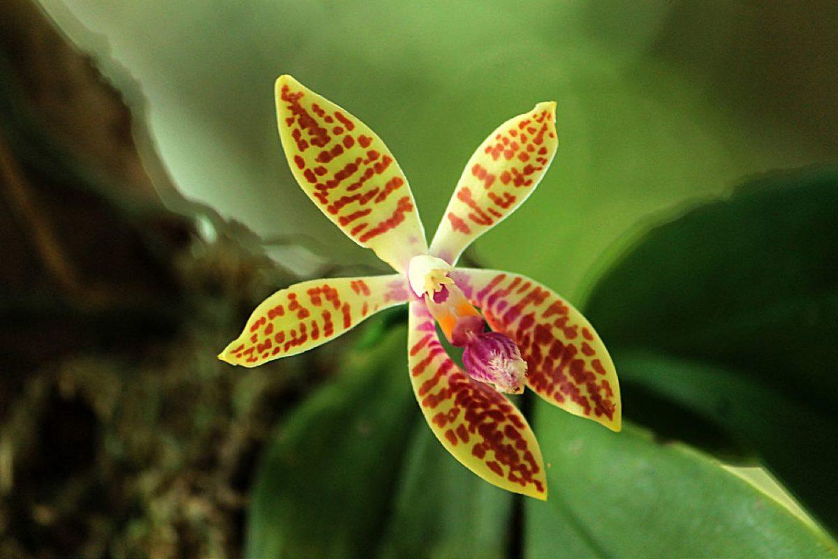 mer enn 1000 forskjellige orkideer på orkide-øya
