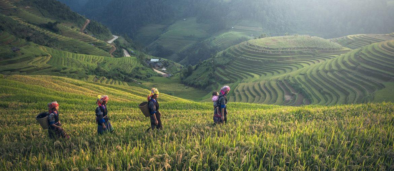 De 5 beste naturopplevelsene på Bali